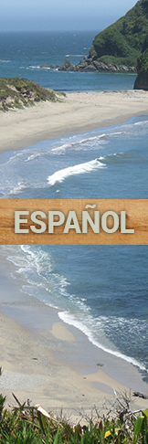Visit this website in Spanish